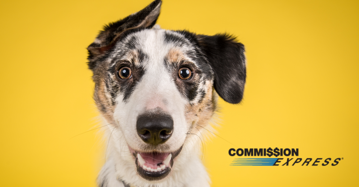 Defuzz Your Commission Advance: Tips for Selling Homes with Animals